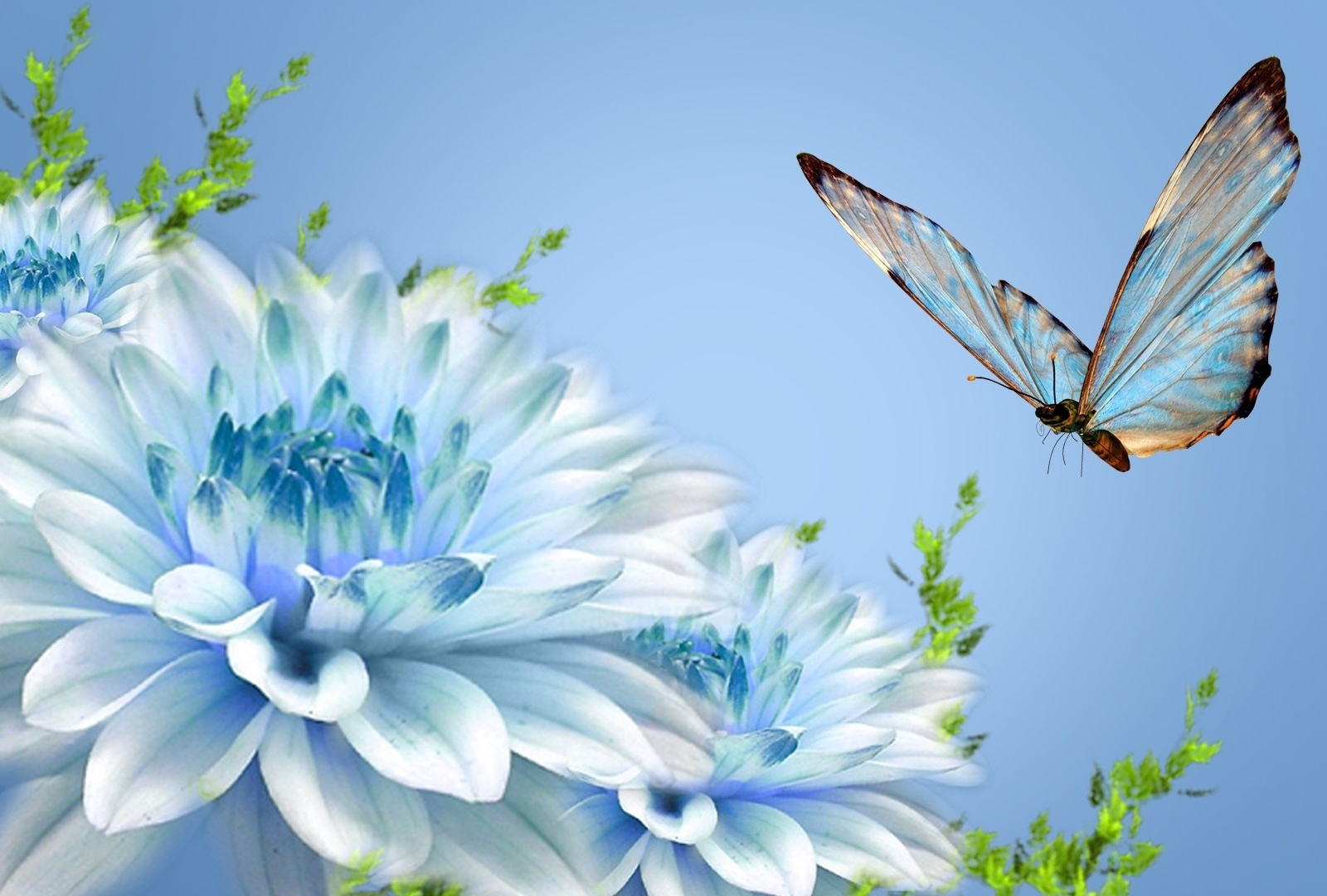 Beautiful Nature Wallpaper Wallpapers For Free Download About 1600x1080