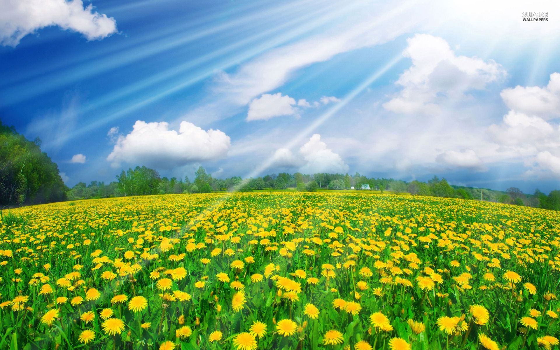 Sunshine Wallpapers Sunshine Wallpapers Sunshine Awesome Photos