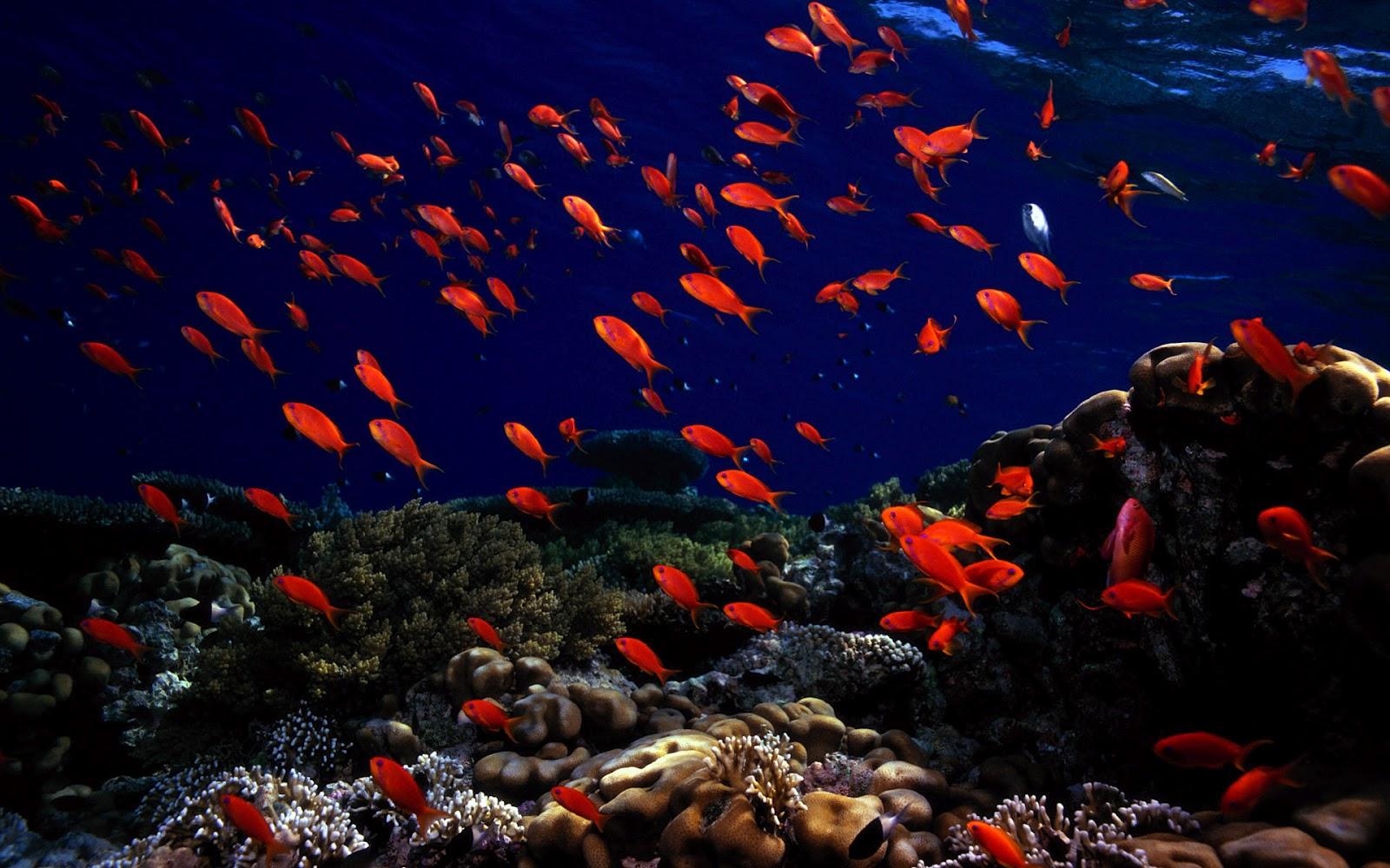 Hd ocean sea life wallpapers