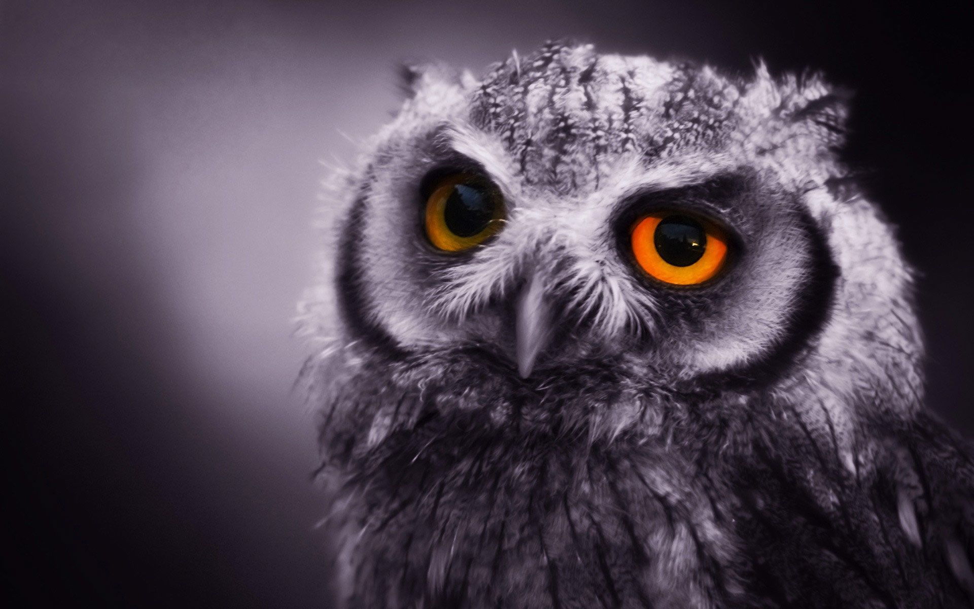 Dark Owl Wallpapers PixelsTalk Cute Wallpaper HD 1920x1200
