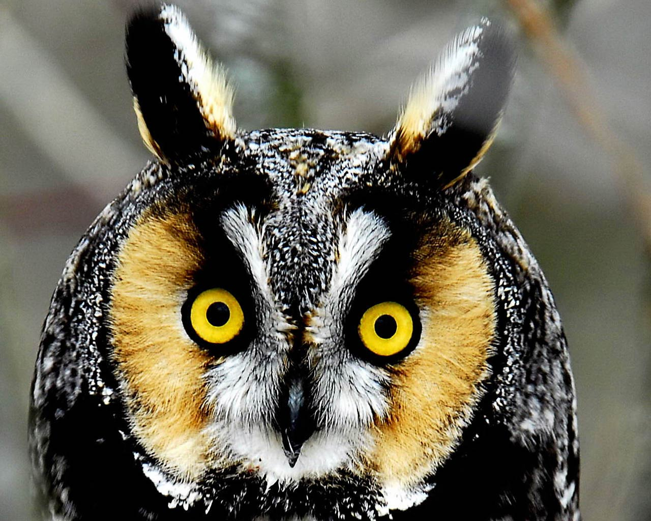 Cute Owl Wallpaper High Definition Wallpapers For Free 1280x1024