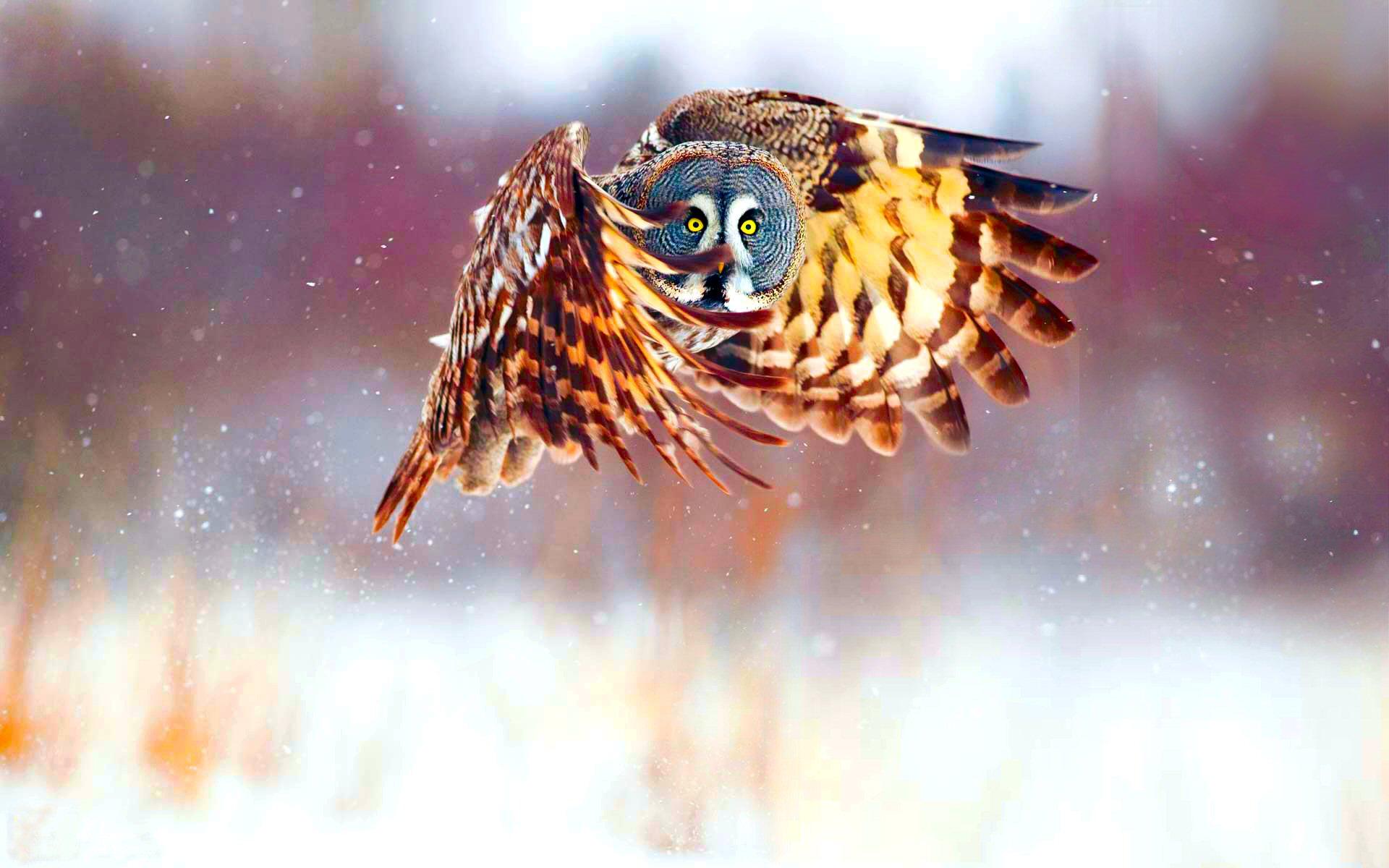 Ideas About Cute Owls Wallpaper On Pinterest Owl 1920x1200