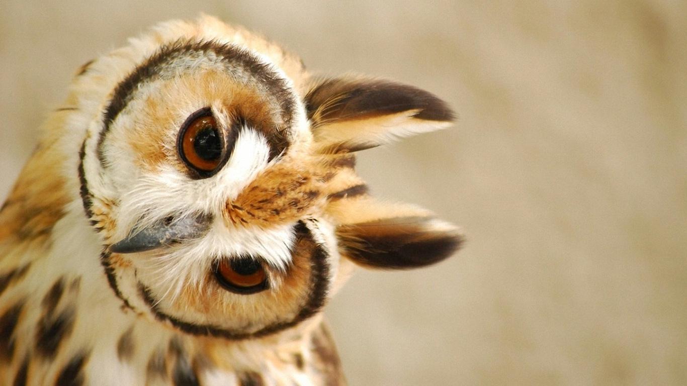 Owl Wallpaper Girly Wallpapers Pinterest 1366x768