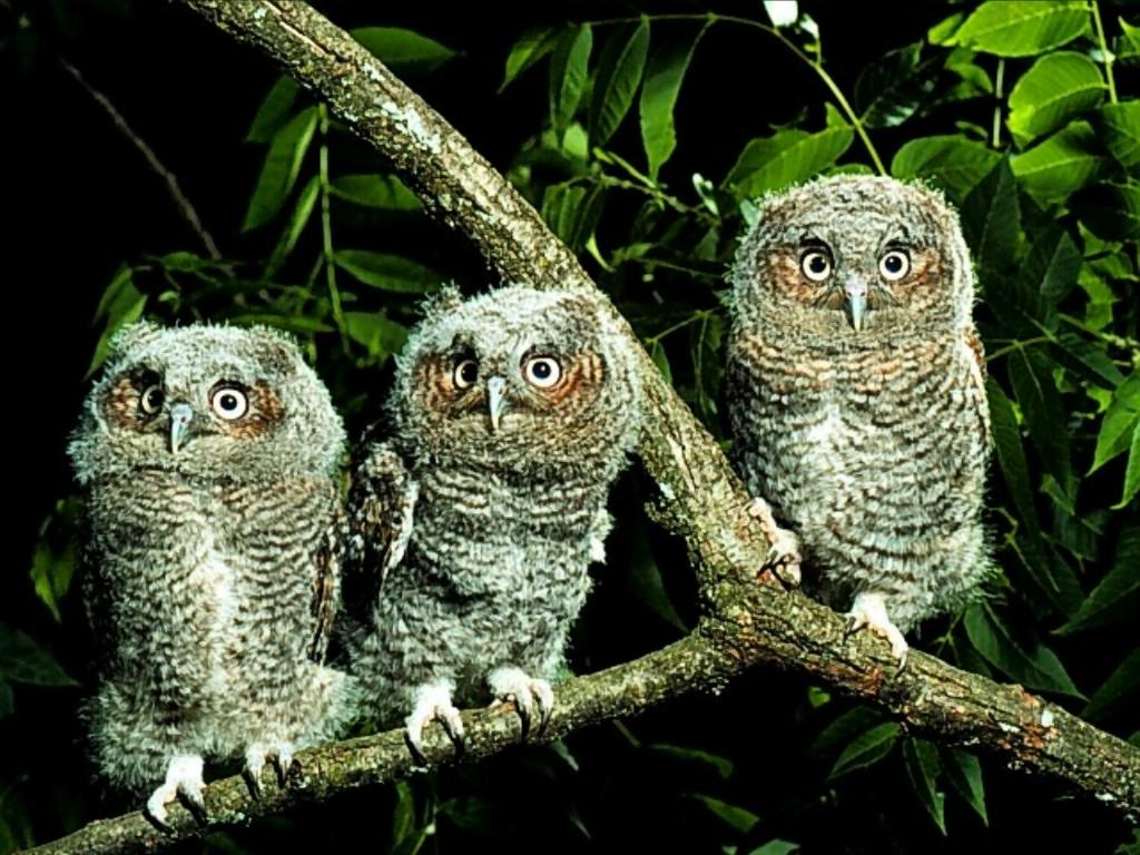 Owl Wallpaper Girly Wallpapers Pinterest 1024x768