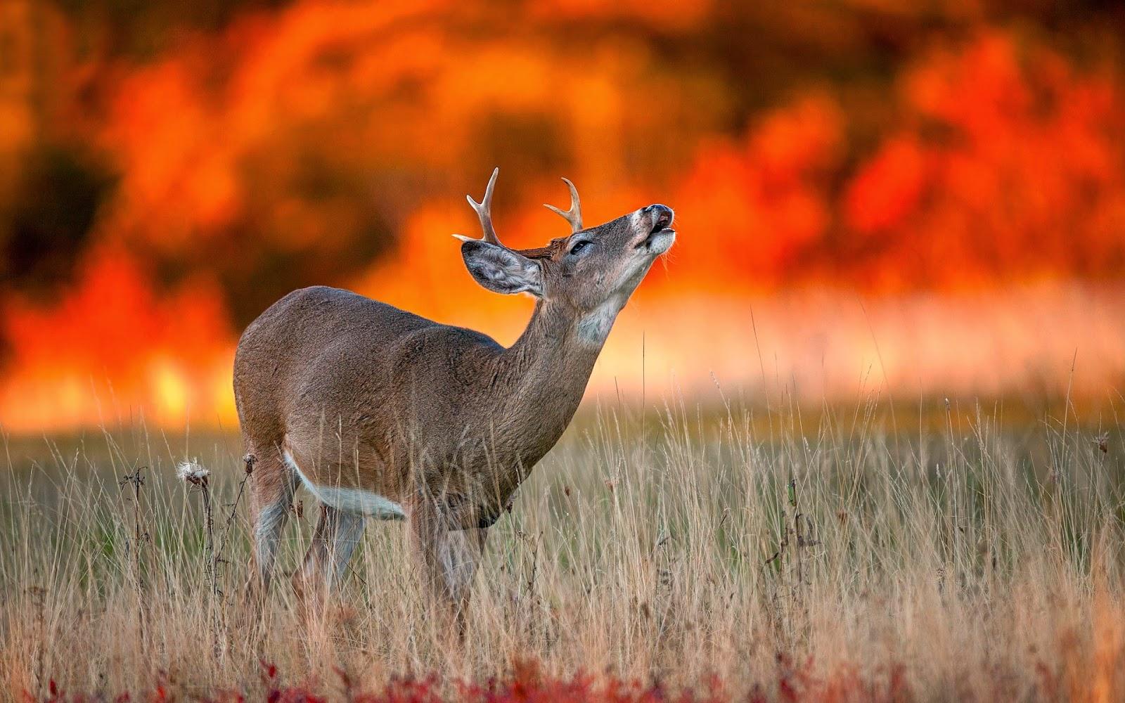 Amazing Animal Desktop Backgrounds HDwallpapers Animal