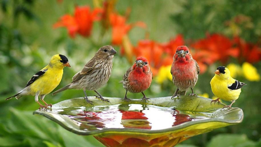 Bird Wallpapers Hd Pixelstalk Birds Wallpaper Download Bird Birds Wallpaper Full Hd Wallpapers 915x515