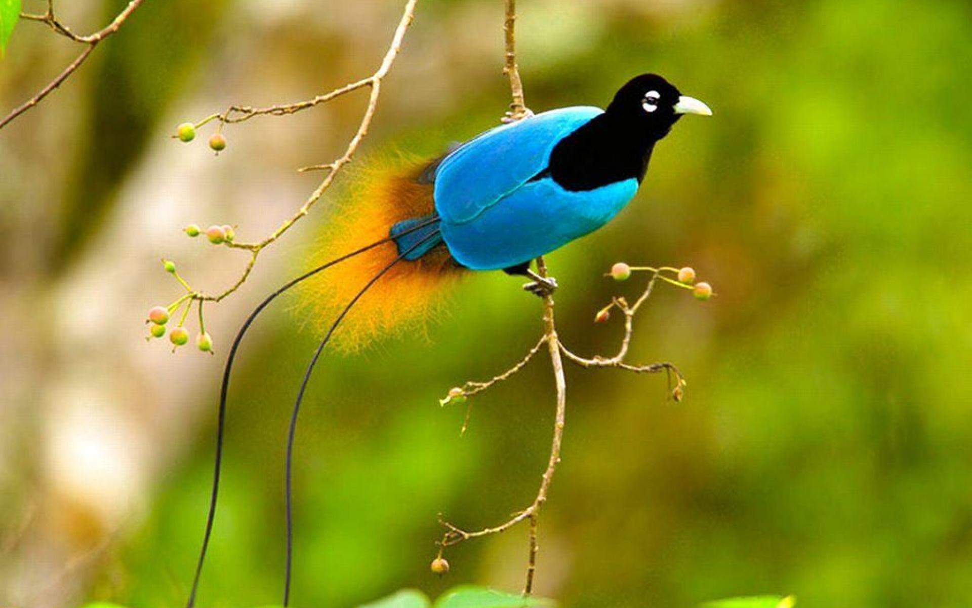 pics of birds wallpapers 009