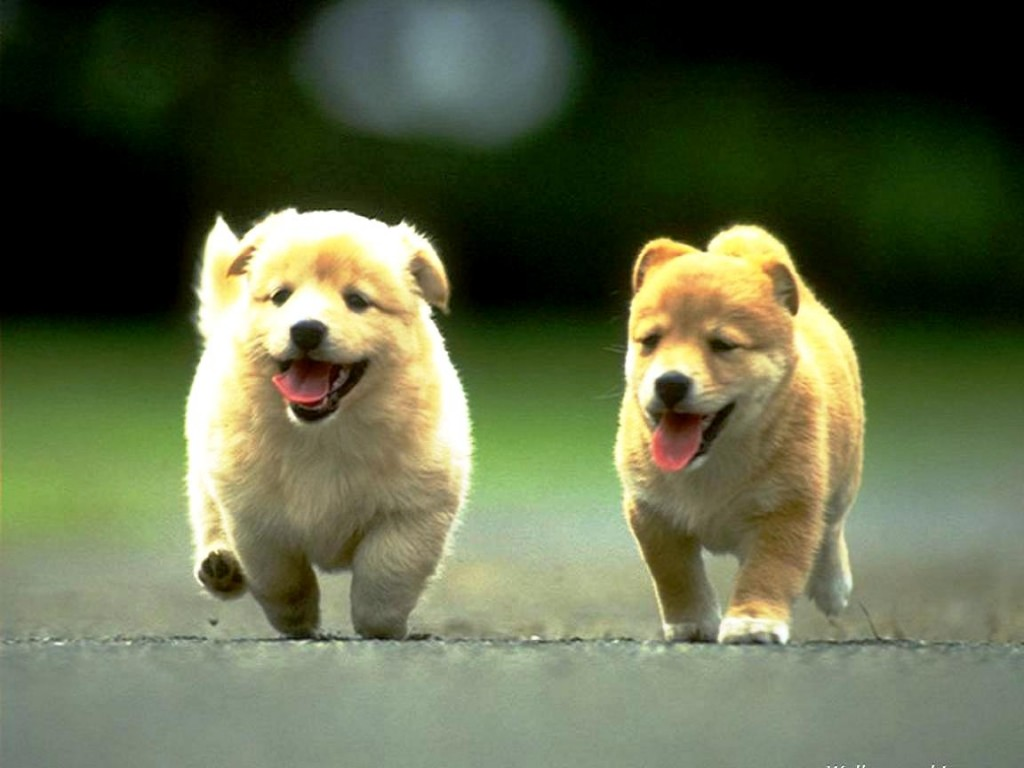 Download Cute Animals Wallpapers Most Beautiful Places In The 1024x768