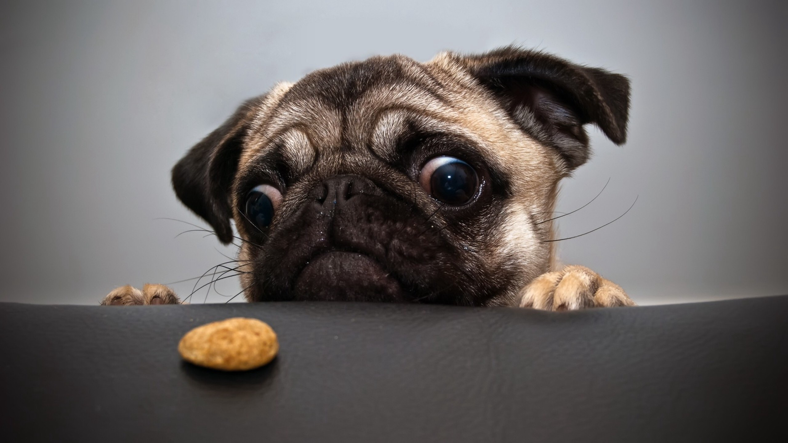 Adorable Dog Photos Cute Wallpapers Download Free Cute Hd Cute 2560x1440