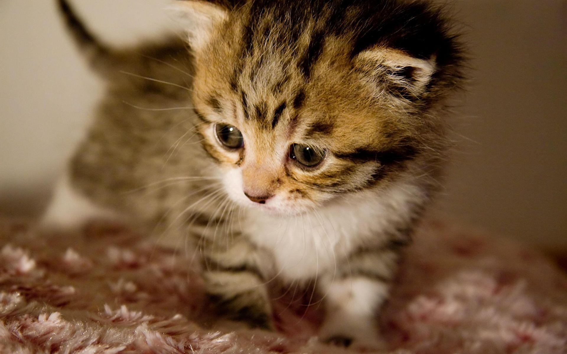 Cute kittens widescreen wallpaper widewallpapers cute little cute kittens widescreen wallpaper widewallpapers cute little kitten wallpaper wallpaper free download 1920x1200 thecheapjerseys Choice Image