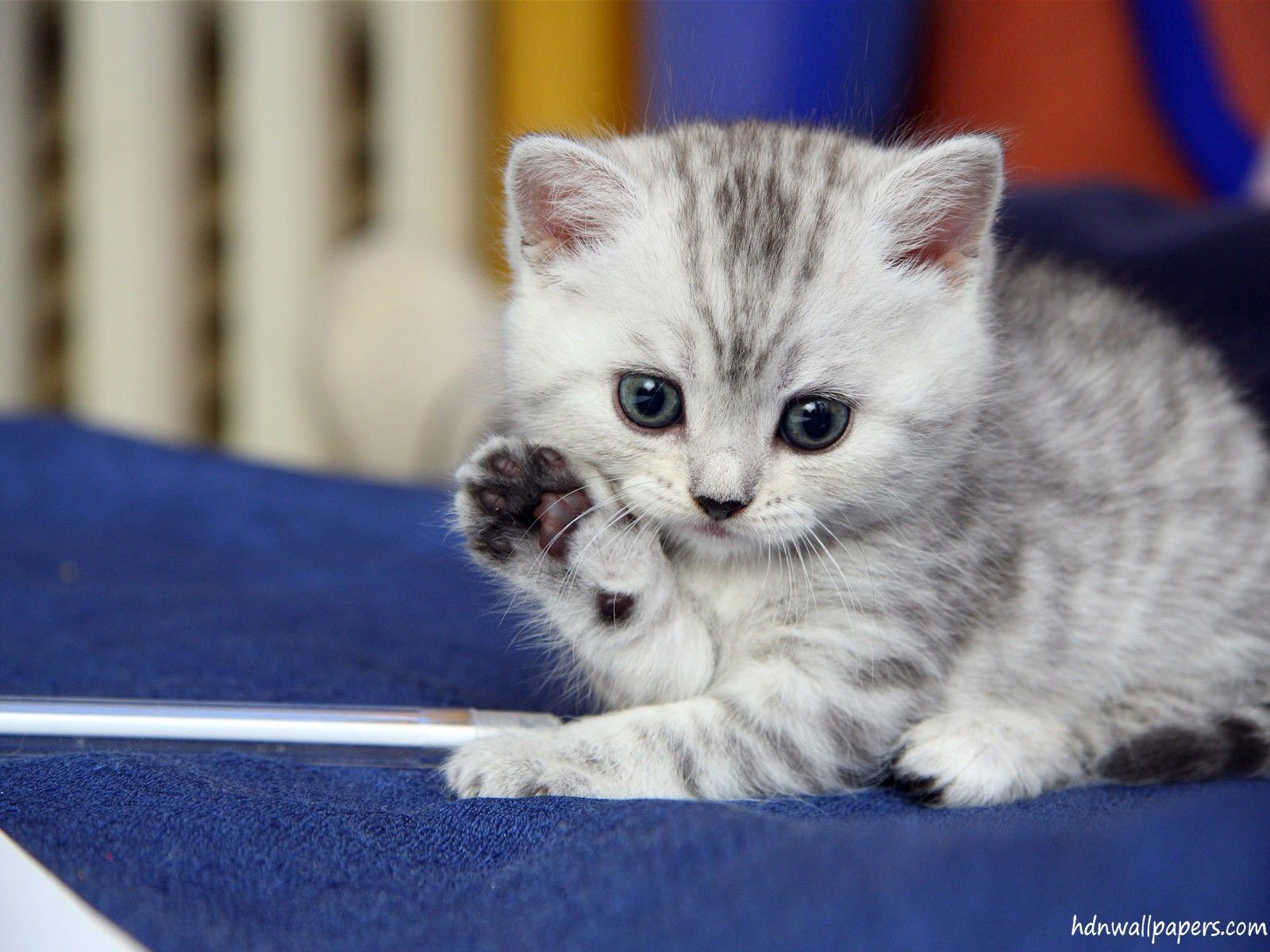 Cute Kitten Wallpaper Free Download 1600x1200