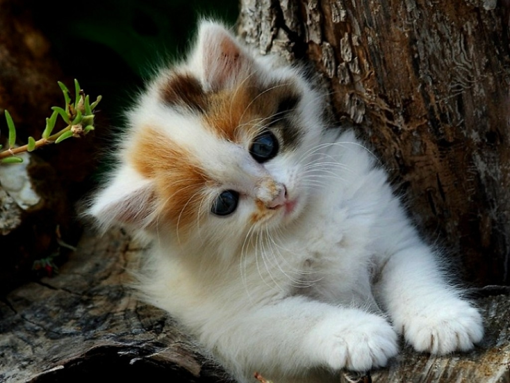 Cute kittens wallpapers for mobile hd cat cute white cats kittens cute kittens wallpapers for mobile hd cat cute white cats kittens 1024x768 altavistaventures Choice Image