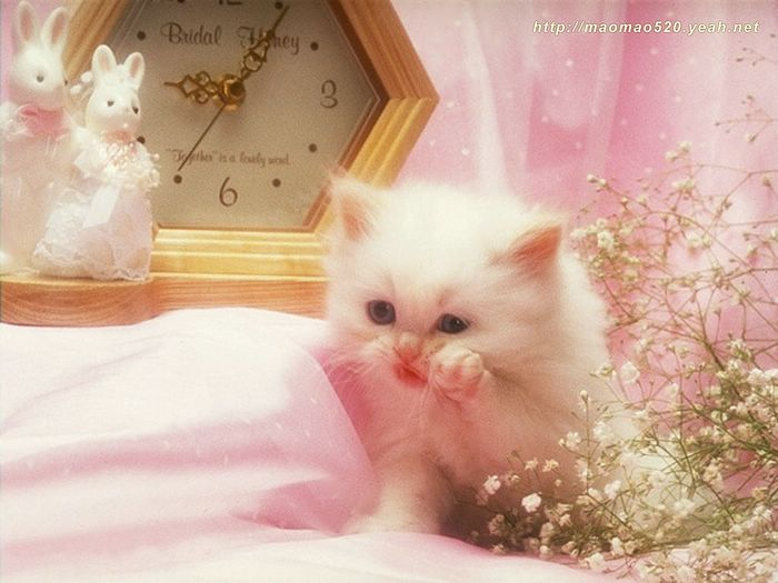 Cute kittens wallpaper hd wallpaper cute kittens wallpapers px cute kittens wallpaper hd wallpaper cute kittens wallpapers px kittens wallpaper 700x525 altavistaventures Choice Image