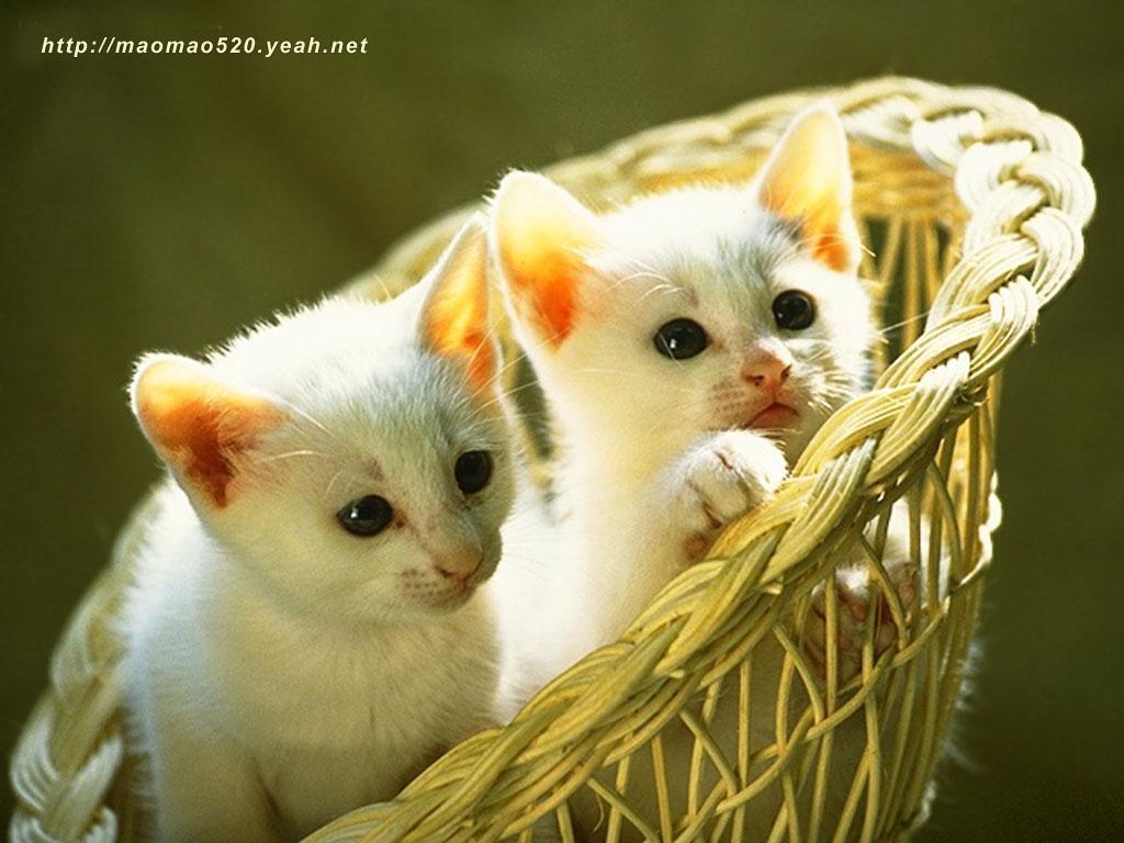 Cute kittens widescreen wallpaper widewallpapers cute little kitten cute kittens widescreen wallpaper widewallpapers cute little kitten wallpaper wallpaper free download 1024x768 altavistaventures Image collections