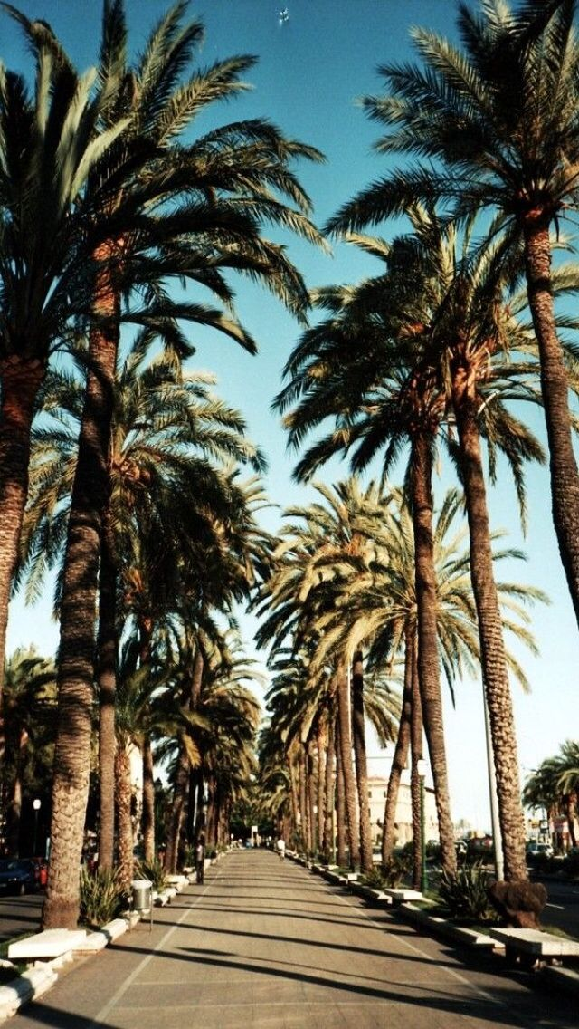 Palm Tree HD Wallpapers  Backgrounds  Wallpaper  640x1136