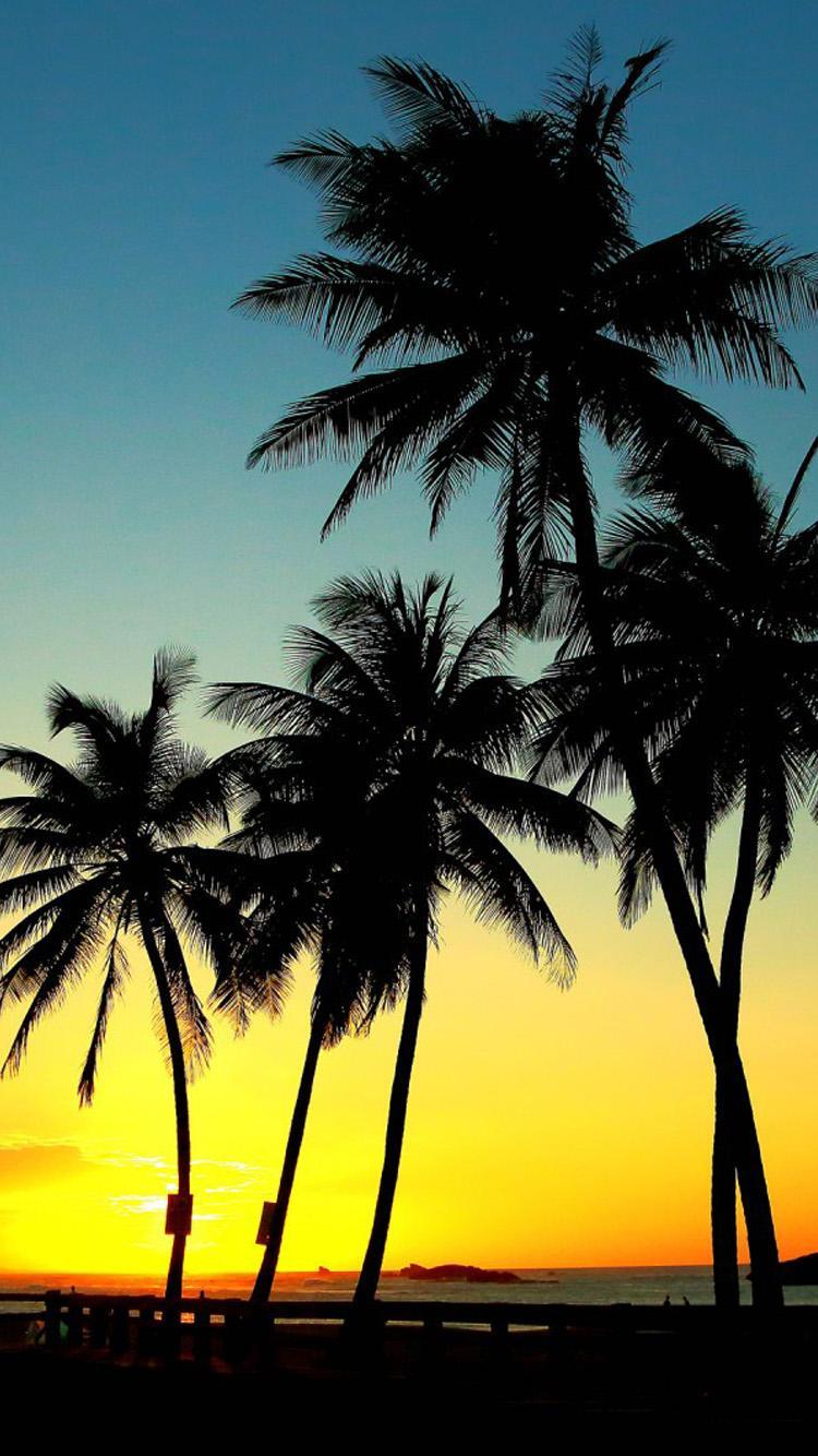 palm tree desktop wallpapers wallpaper 750x1334