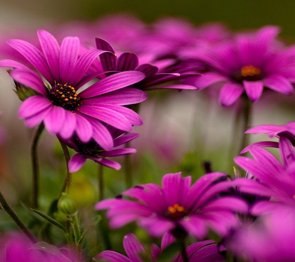 Pink Color Wallpapers Free Download (38 Wallpapers