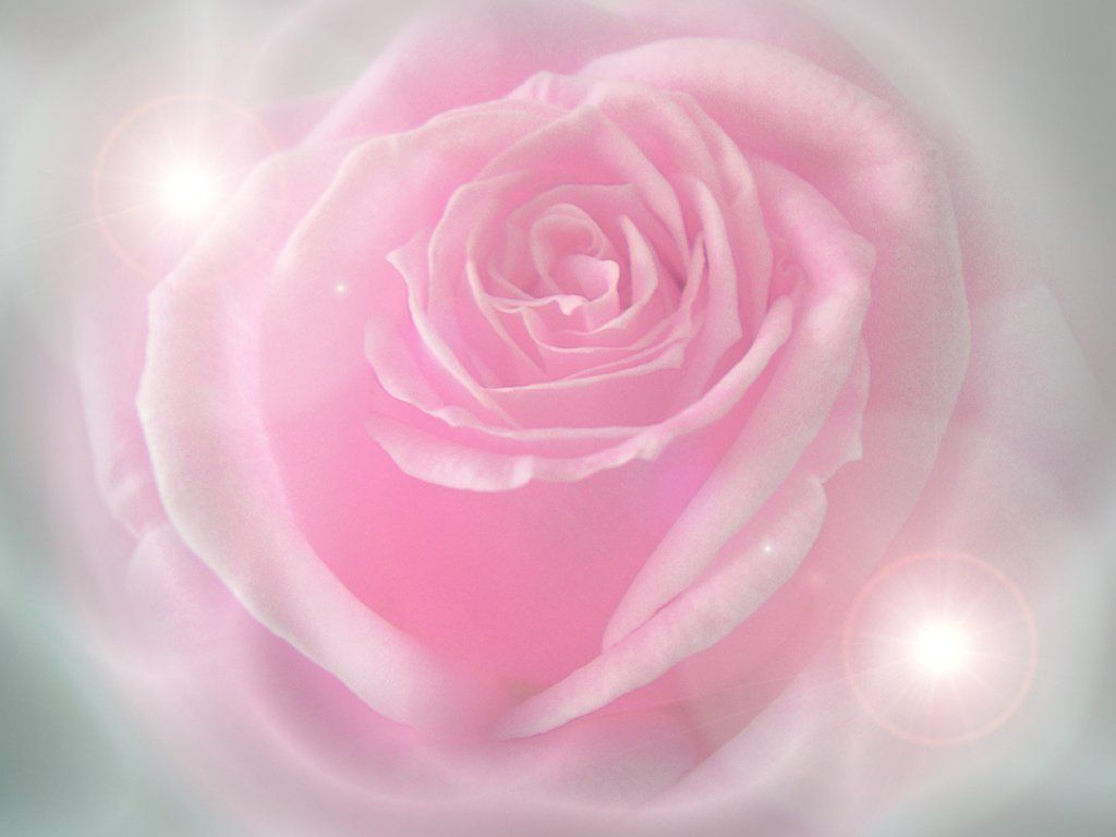 Pink Rose Wallpapers Hd Pictures Flowers One Hd Wallpaper 1024x768