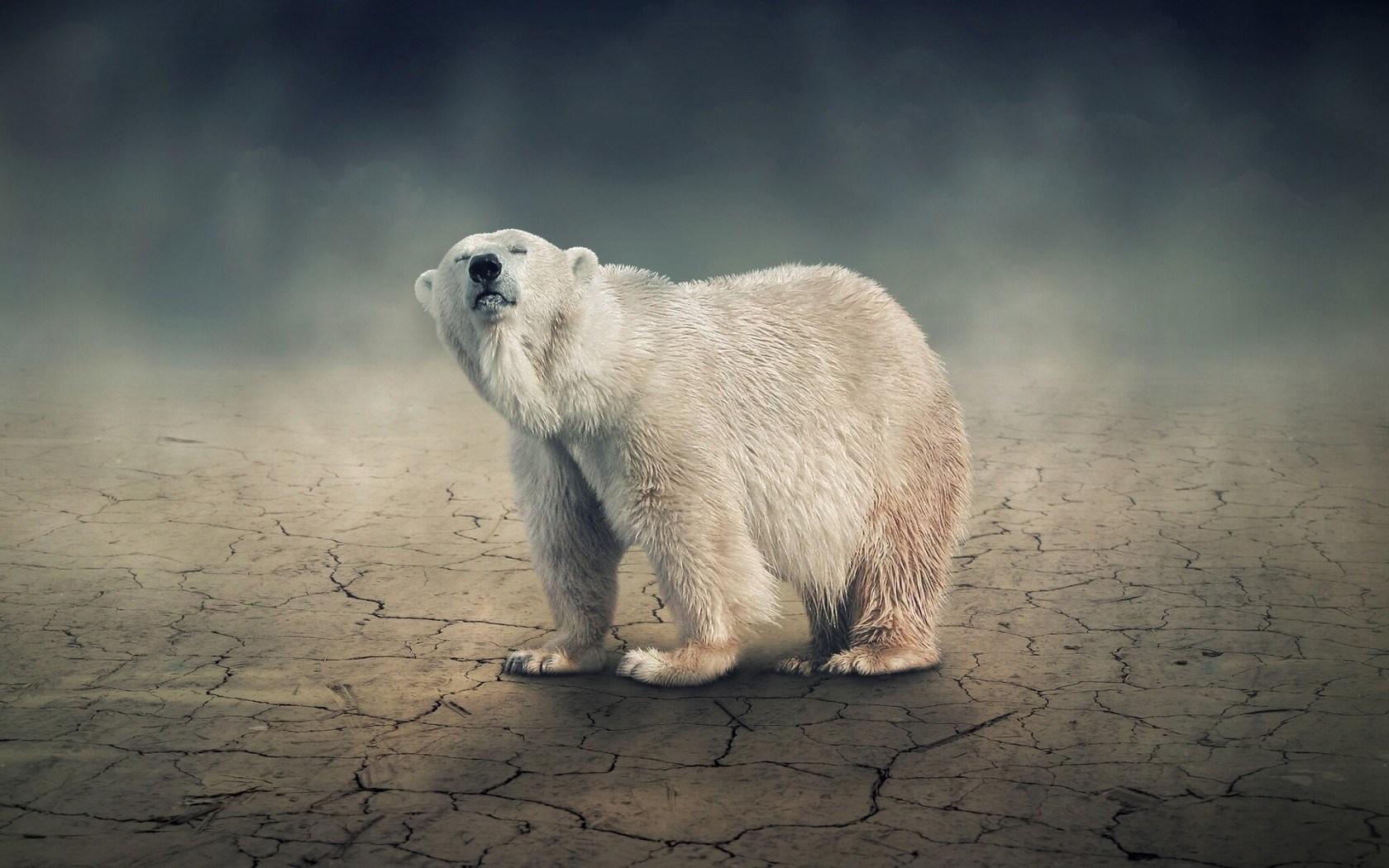 polar bear mother iphone s wallpapers iphone s wallpaper polar bear