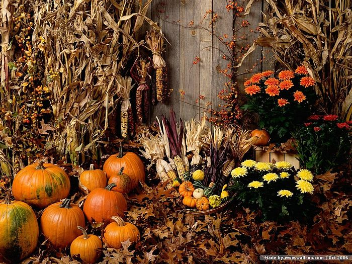Pumpkins Wallpapers Desktop K HQ Definition Images SHX HD Wallpaper High Fullscreen Mobile 700x525