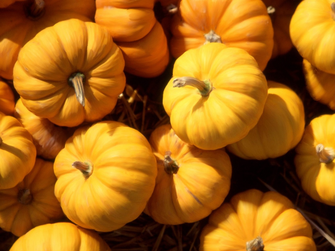 K Pumpkin Wallpapers High Quality  Download Free 1280x960