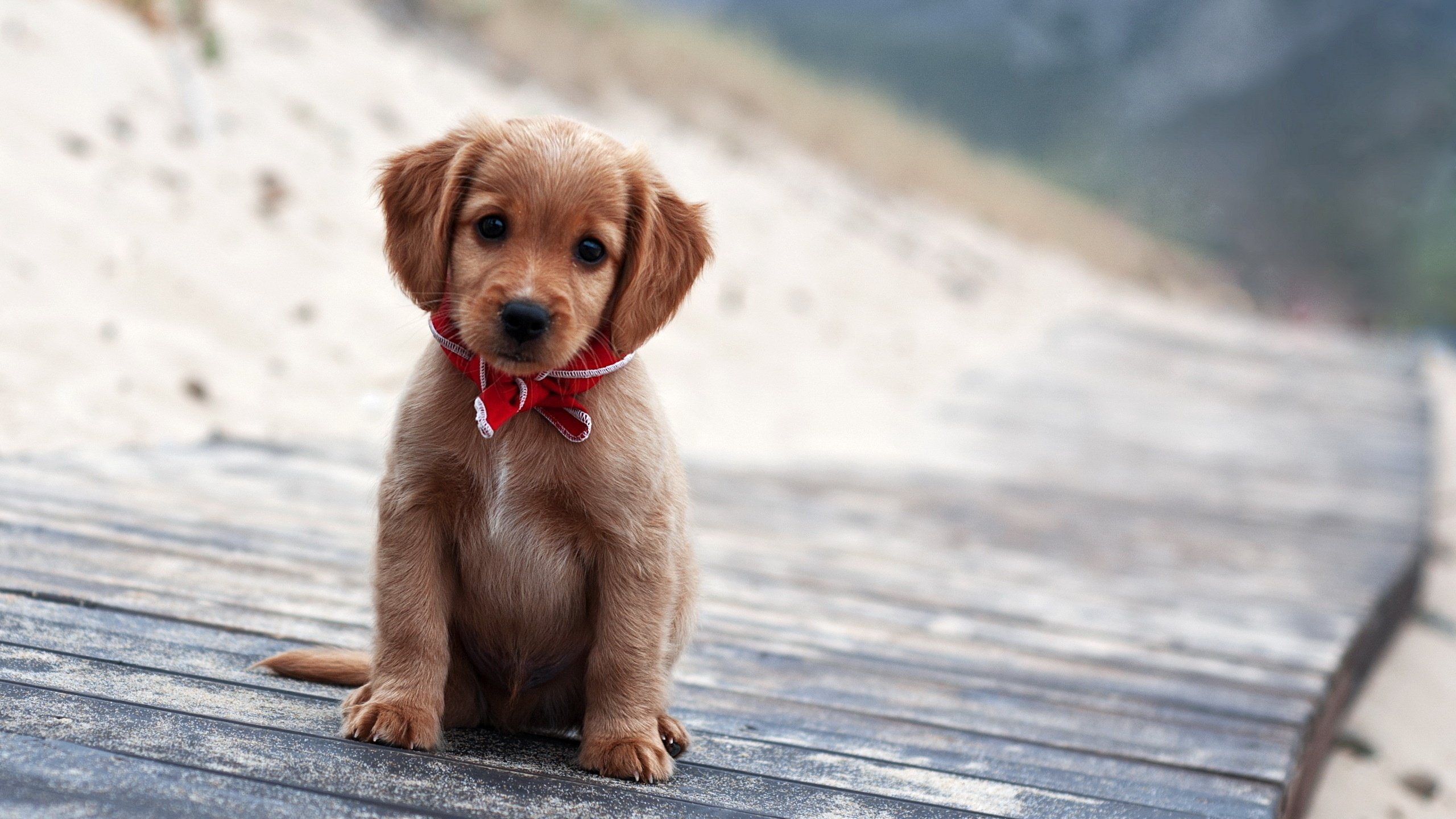 Cute puppy wallpaper wallpapers for free download about (, 2560x1440