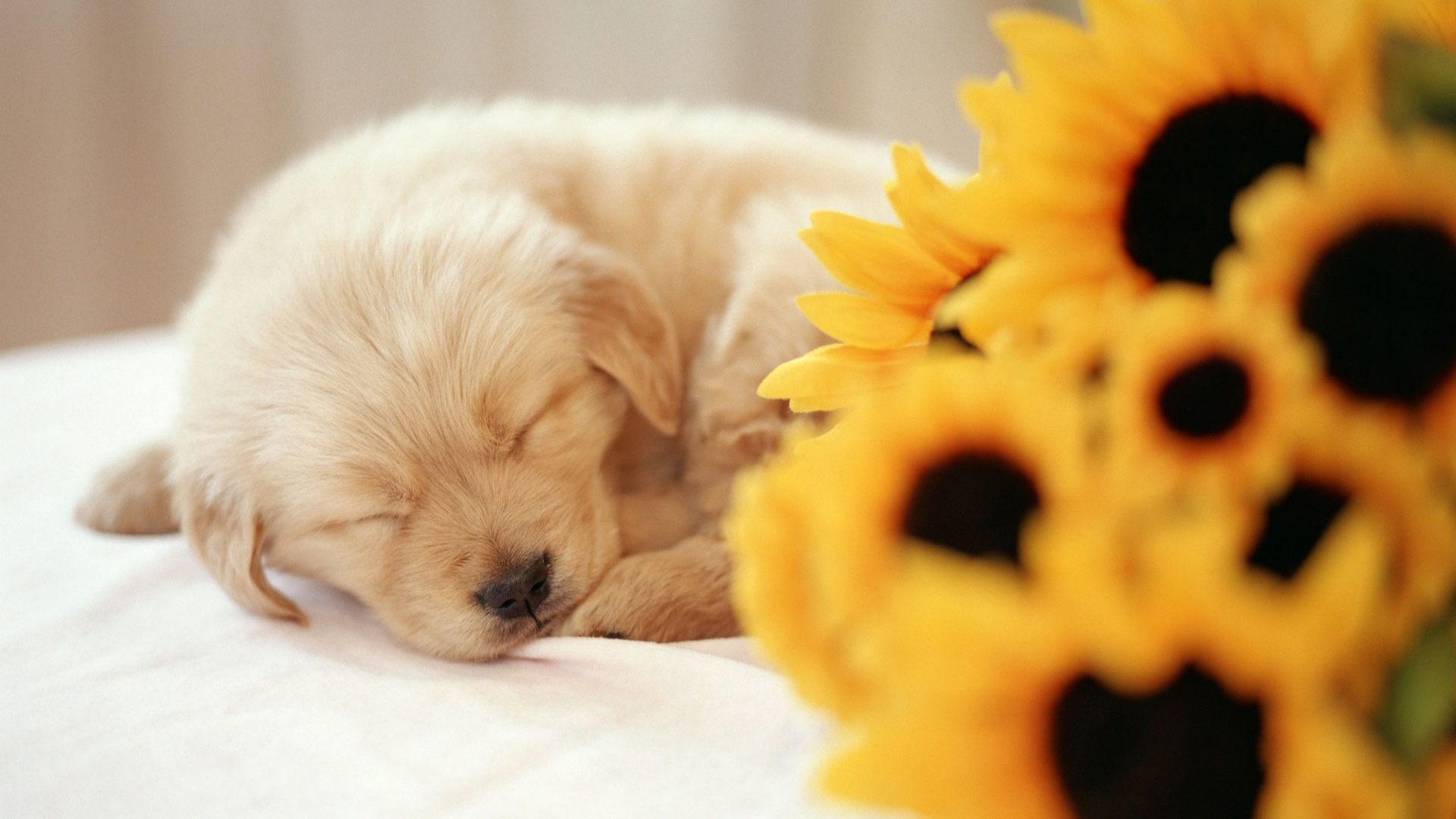 Cute puppy wallpaper wallpapers for free download about (, 1920x1080