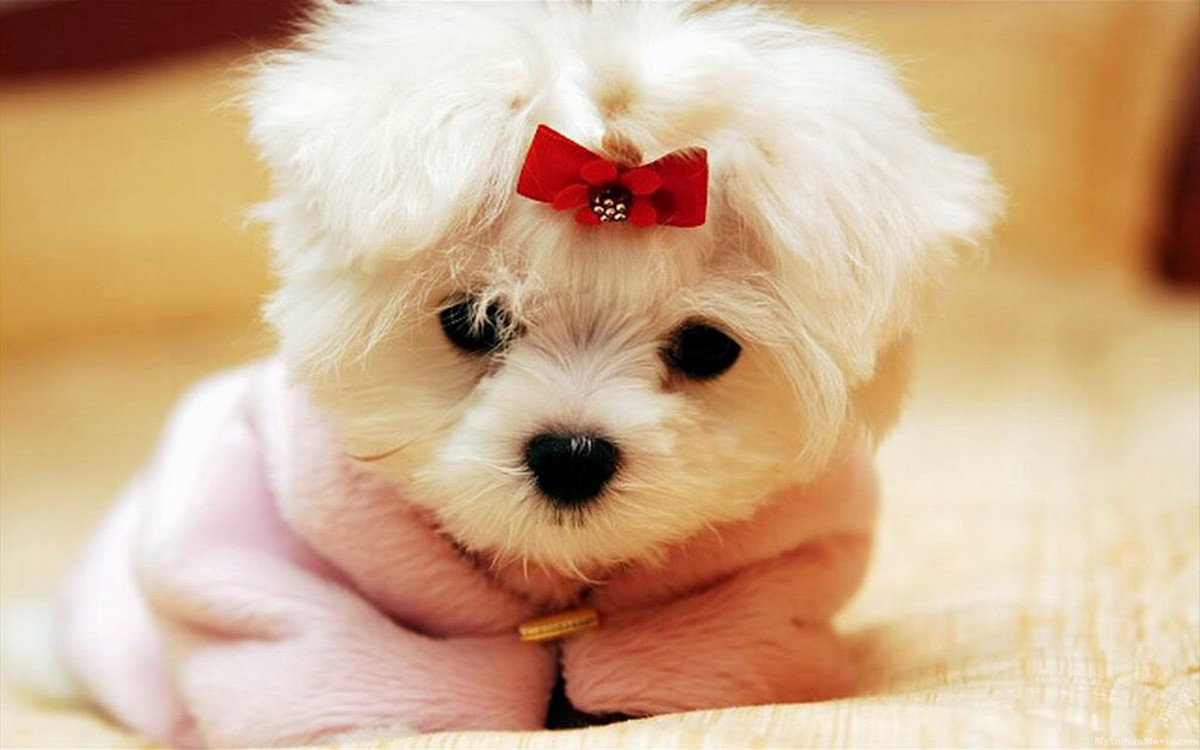 Puppy Wallpapers Free Group  1200x750