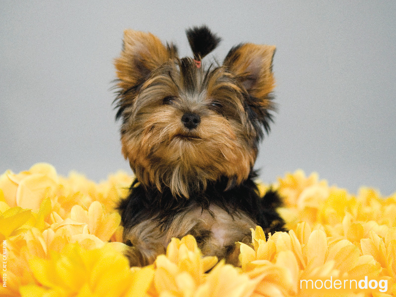 Free Puppy Wallpapers For Computer  Wallpaper  800x600