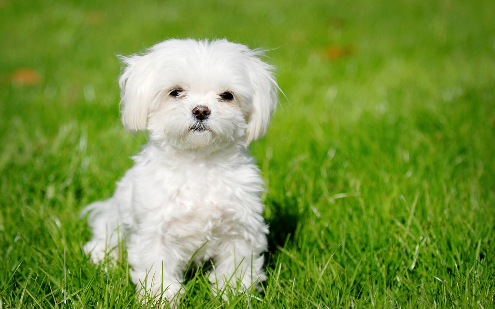 Cute Puppy Wallpapers Group  1600x1000