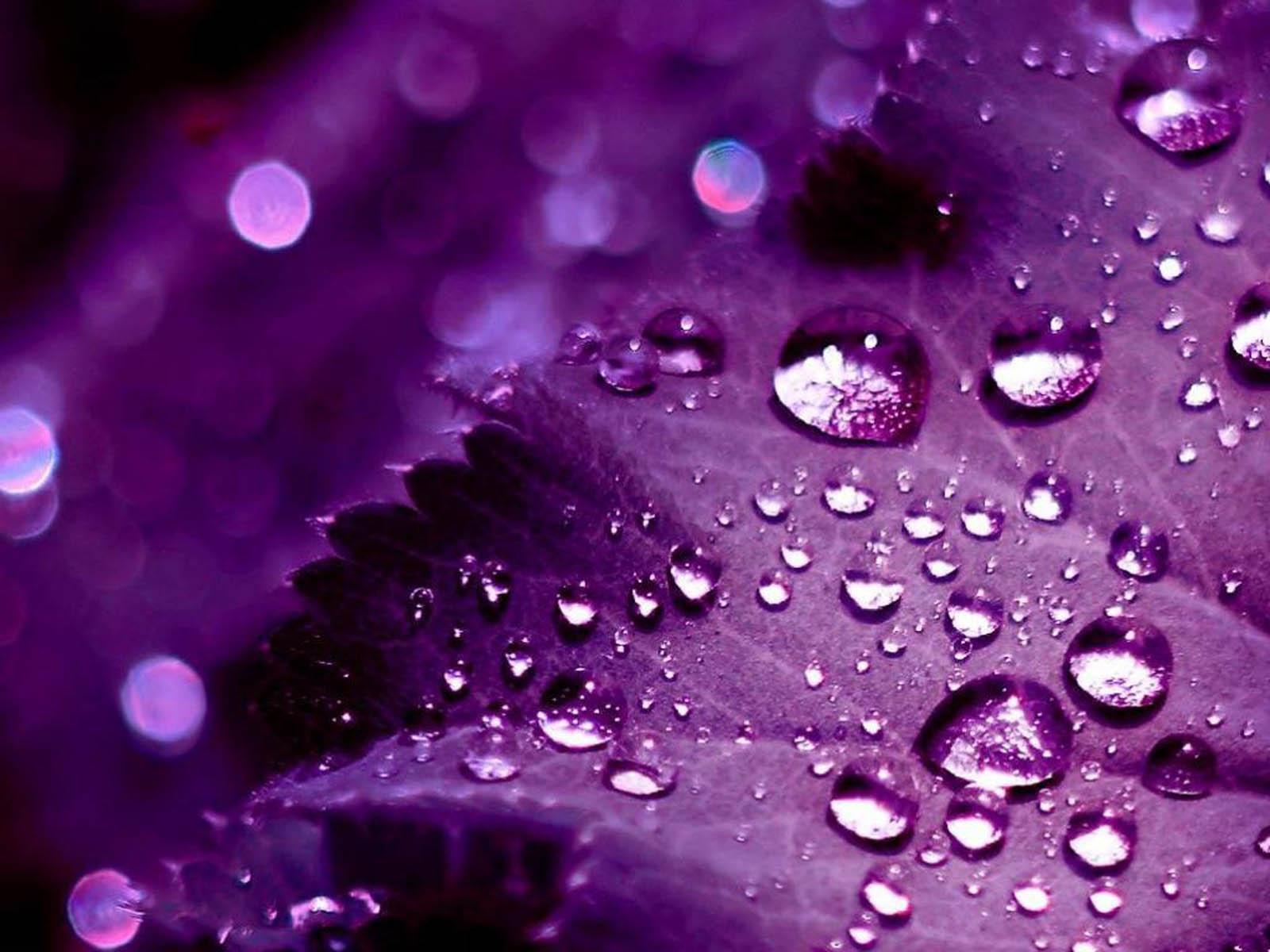 Top Wallpaper High Resolution Purple - Purple-Wallpapers-003  Collection_363712.jpg