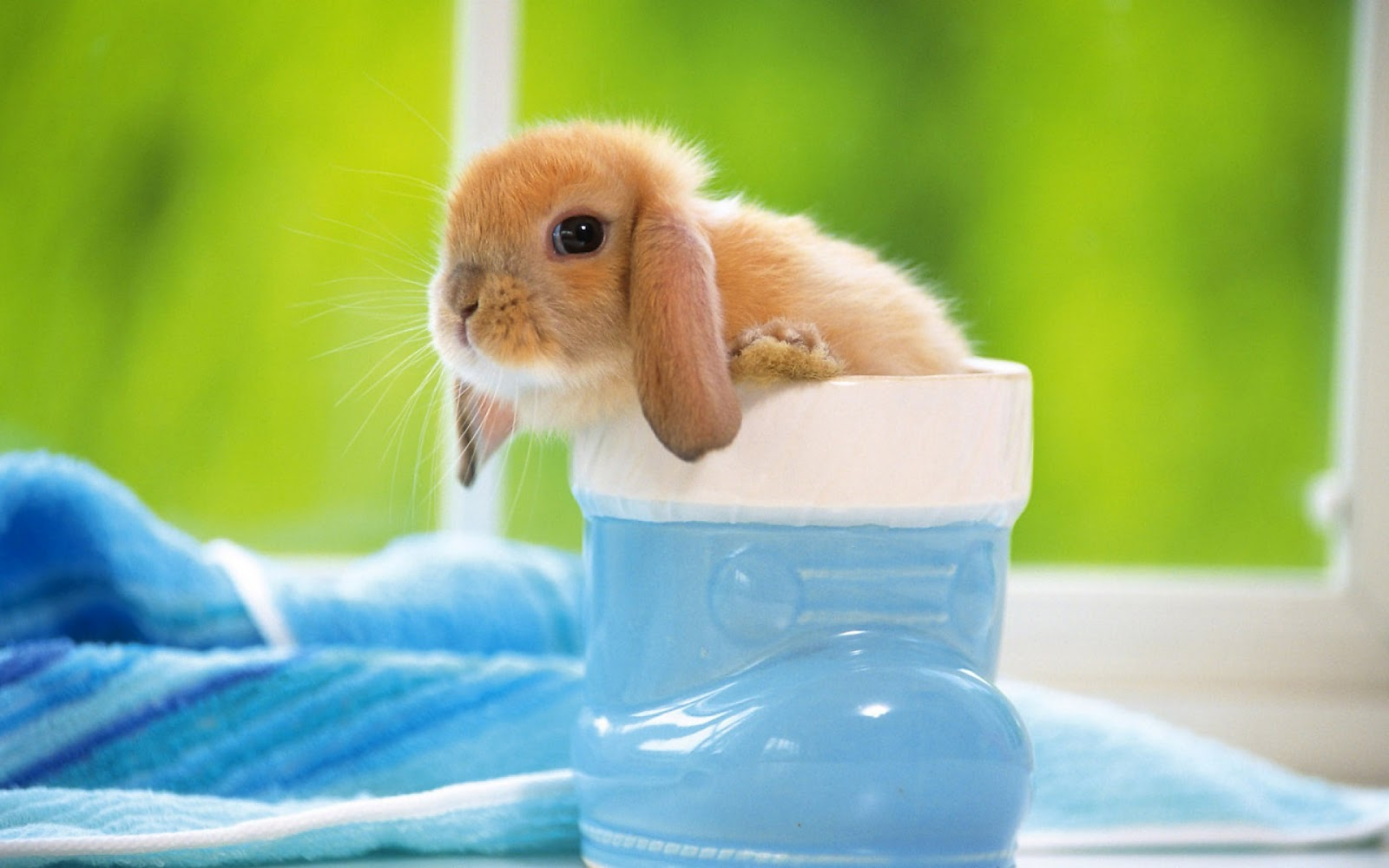 Rabbit Wallpapers Free Download Cute White Hd Desktop Wide Images