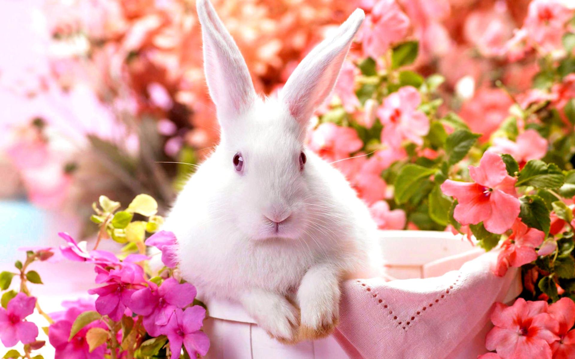 Rabbit Wallpaper Hdwallpapersets Rabbit Hd Wallpapers Backgrounds