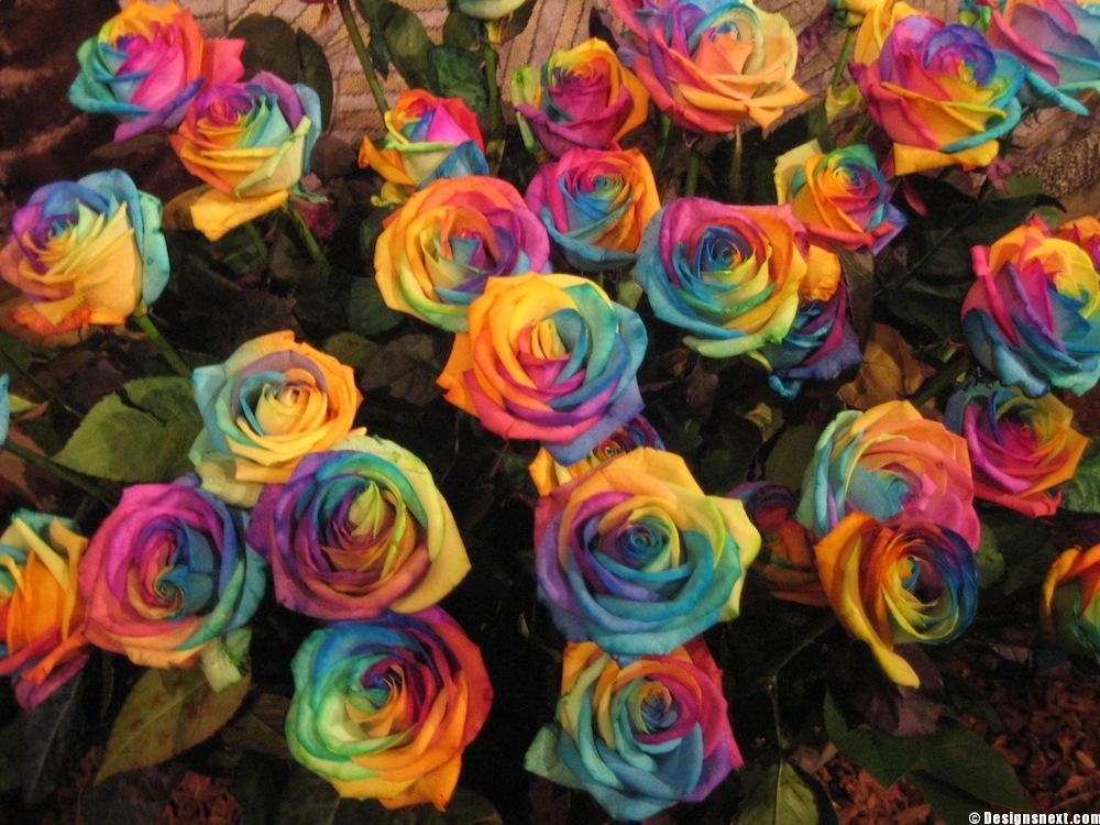 Wallpapers Tagged With Roses Page Roses Bouquet Rainbow