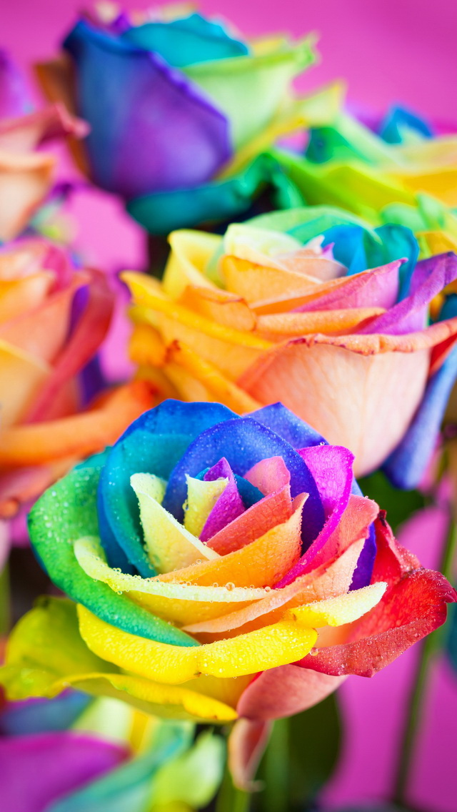 Rainbow Rose By On deviantART