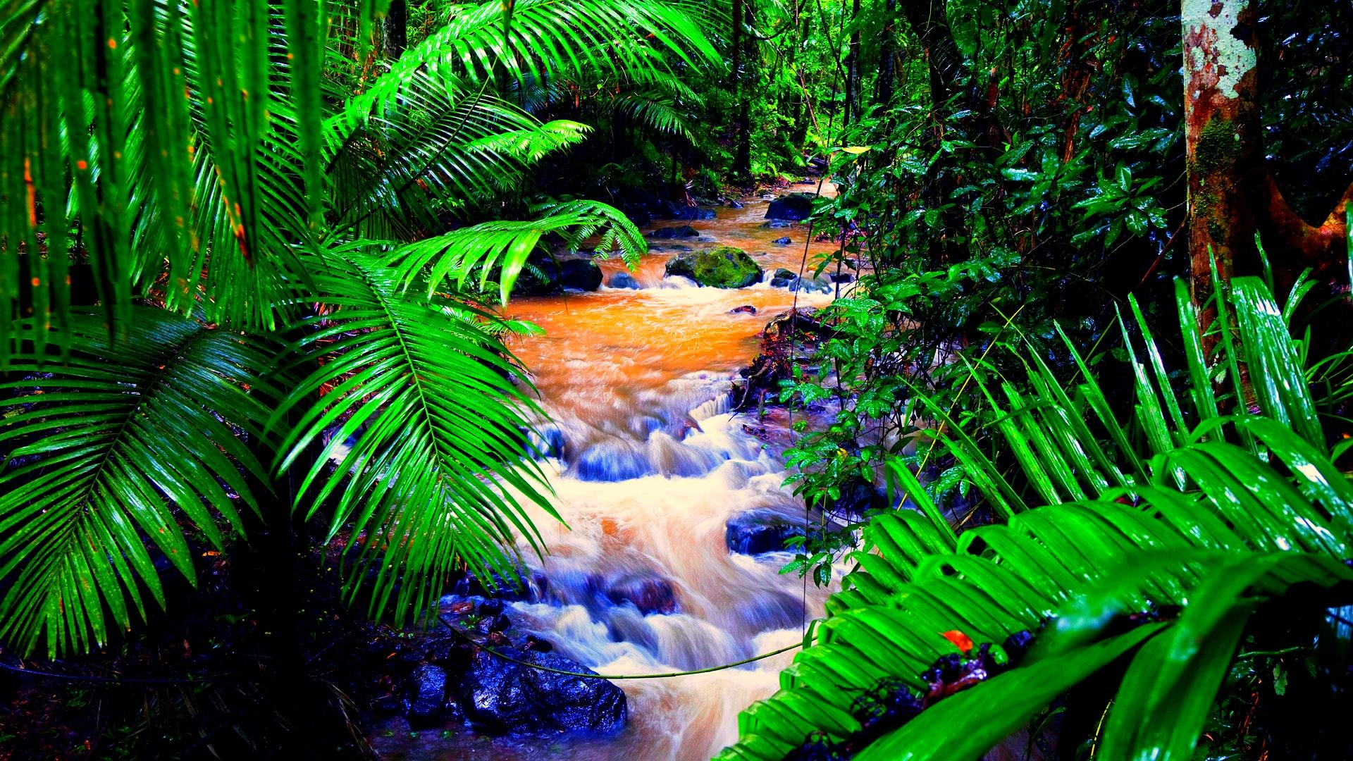 Rainforest HD desktop wallpaper : High Definition : Fullscreen 1920x1080