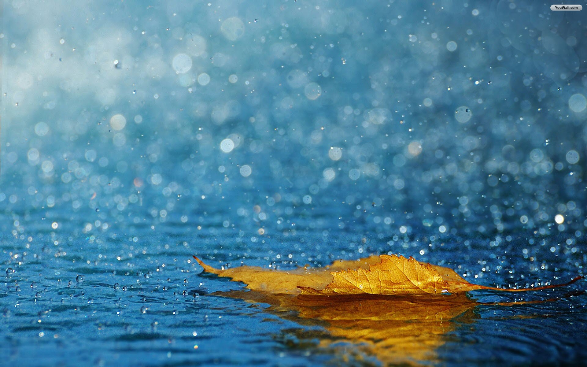 beautiful rainy seasons wallpapers images HD Wallpapers Buzz 1920x1200