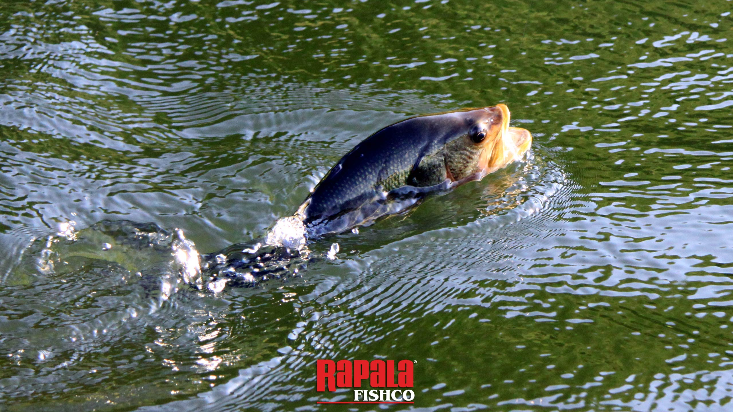 Rapala Fishing Games List  About Types of Fish 2560x1440