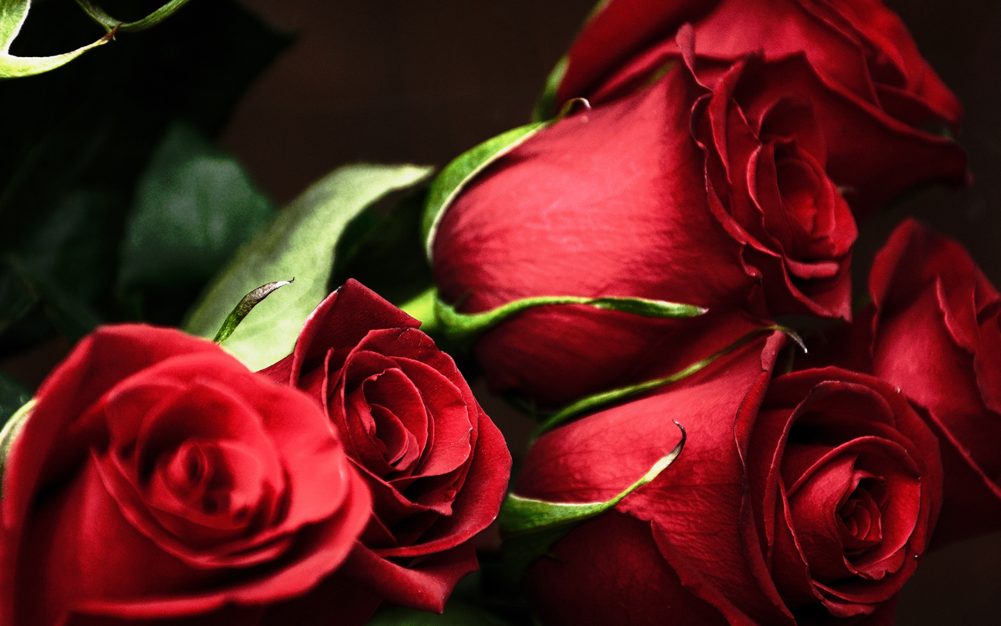 Red Rose Live Wallpaper Android Apps On Google Play 1440x900