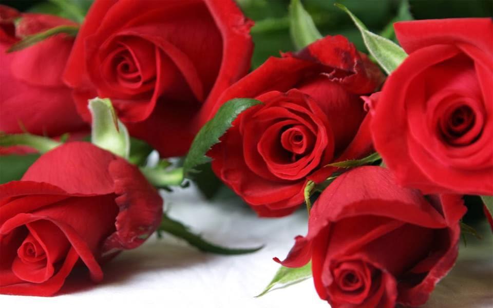 Red Roses Background Hd Desktop Wallpaper Widescreen High 960x600