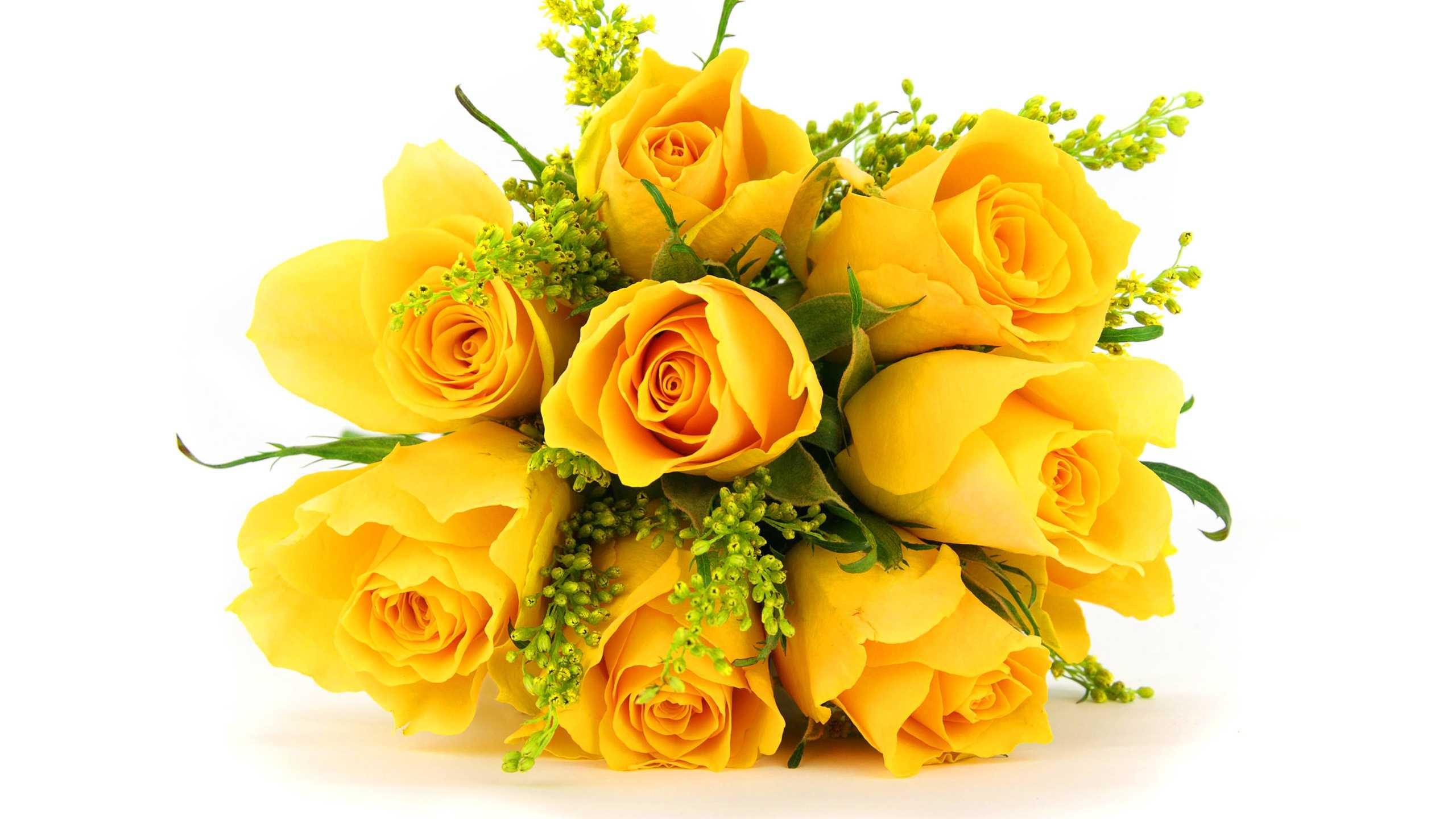 Rose Flower Wallpaper Reviews Online Shopping Rose Flower 2560x1440