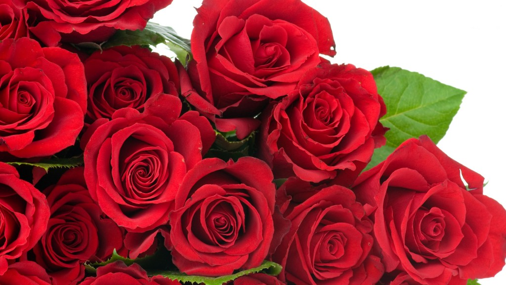 Collection of Rose Flower Wallpaper on HDWallpapers 1024x576