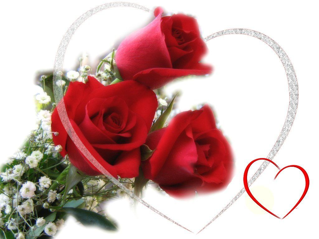Only Red Roses High Quality Wallpapers  Infotainment 1024x768