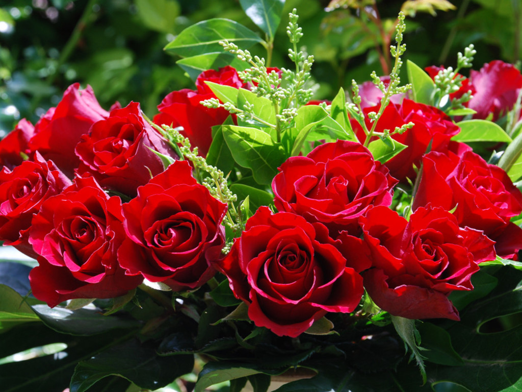 only red roses high quality wallpapers 1024x768