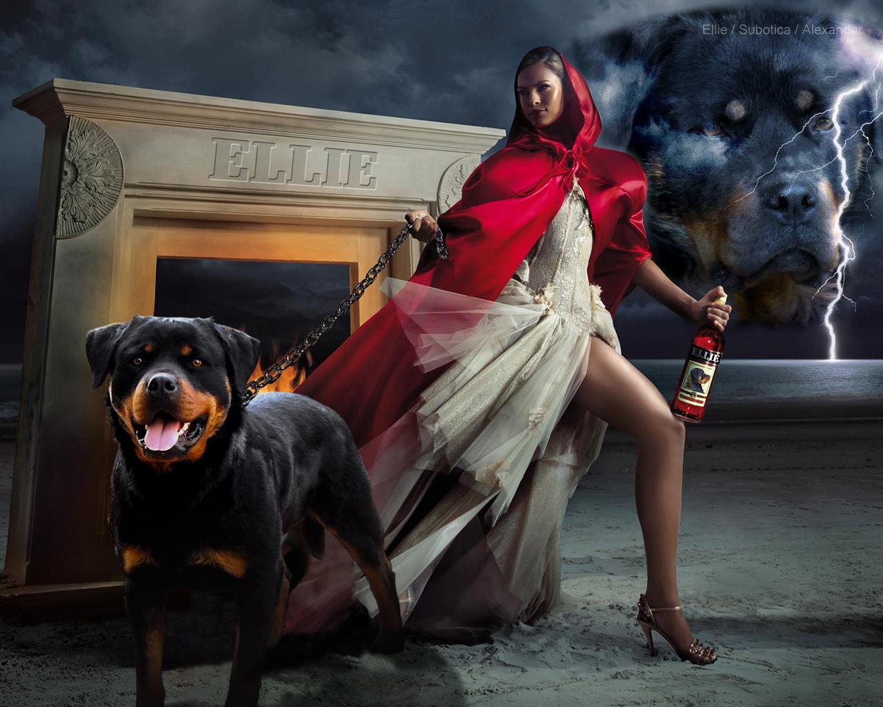 Full HD P Rottweiler Wallpapers Desktop Backgrounds 1280x1024
