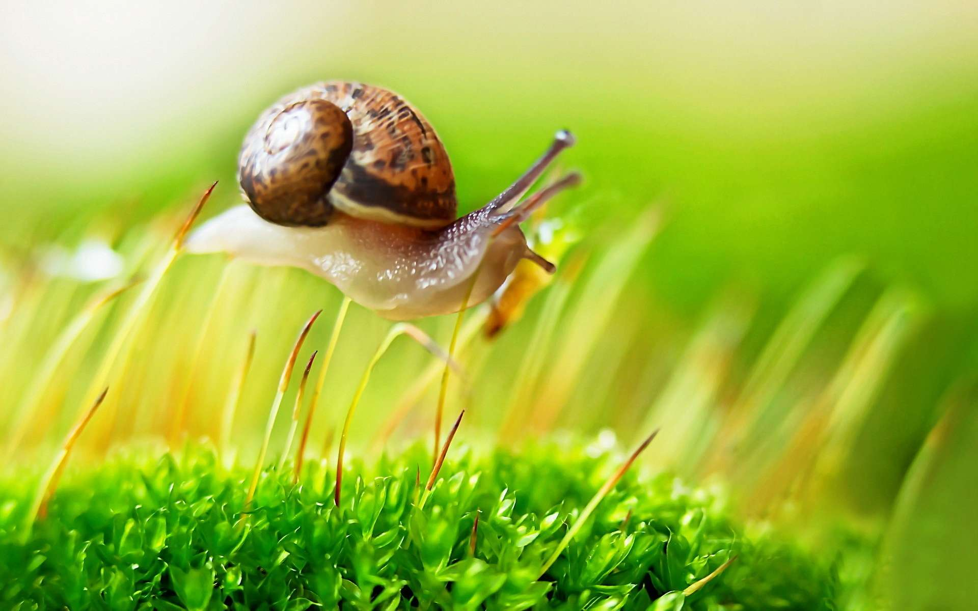 Snail HD Wallpapers  Backgrounds  Wallpaper  1920x1200