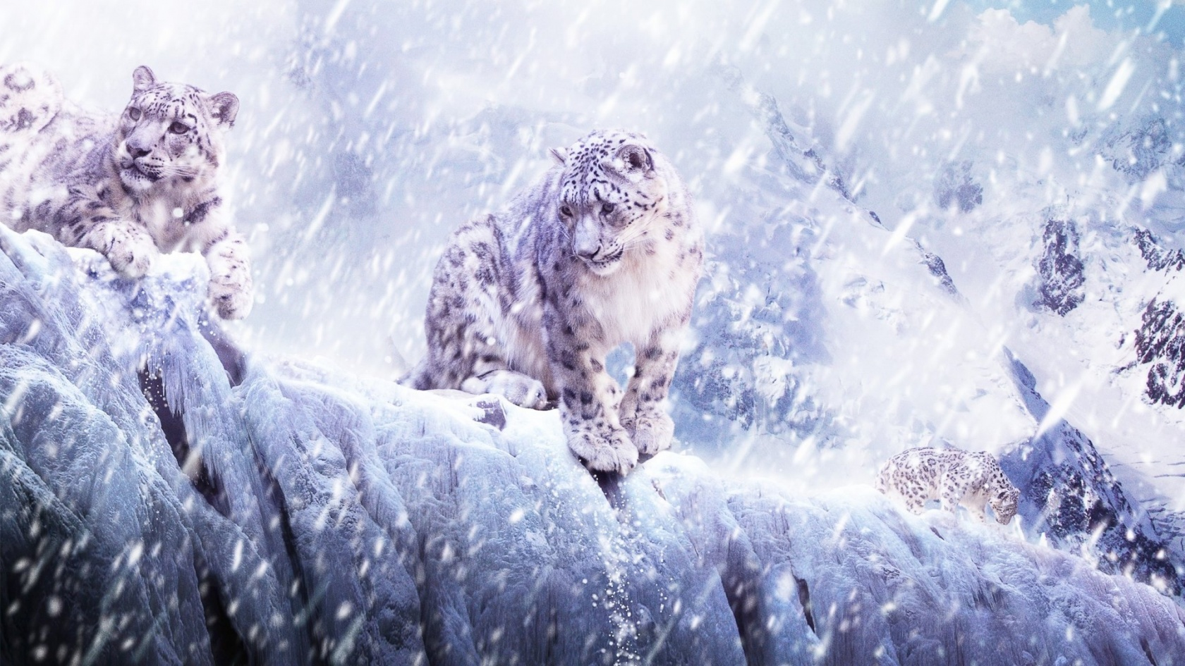 Snow Leopard Flying HD desktop wallpaper : High Definition 1680x945