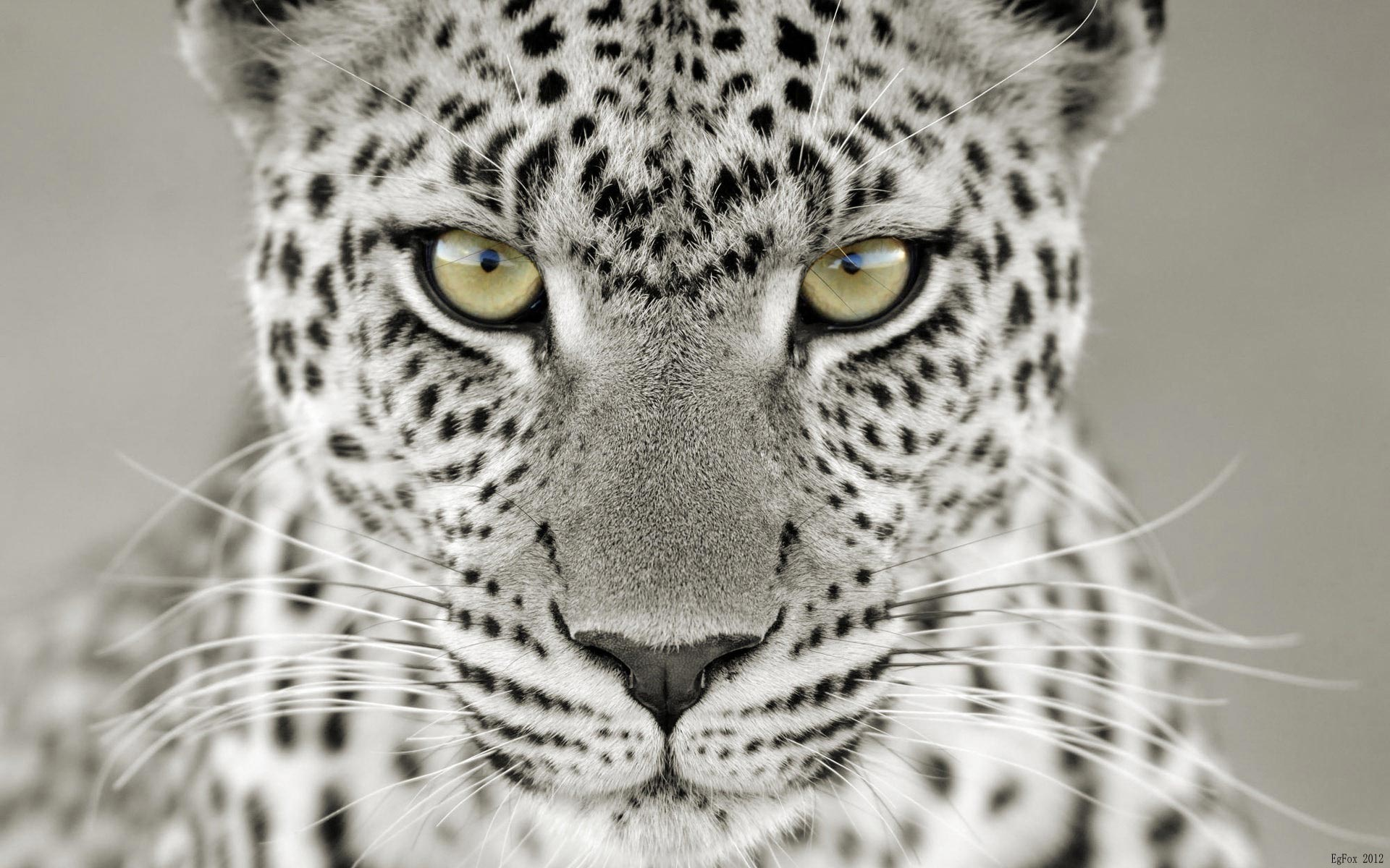 Snow Leopard HD desktop wallpaper : High Definition : Fullscreen 1920x1200