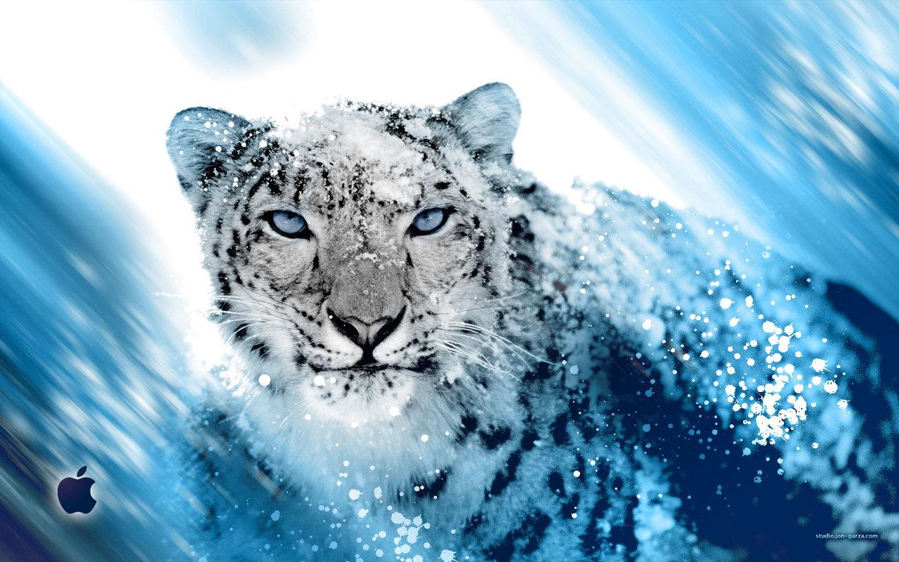 Top Wallpaper Mac Snow Leopard - Snow-Leopard-Wallpaper-055  HD_111957.jpg