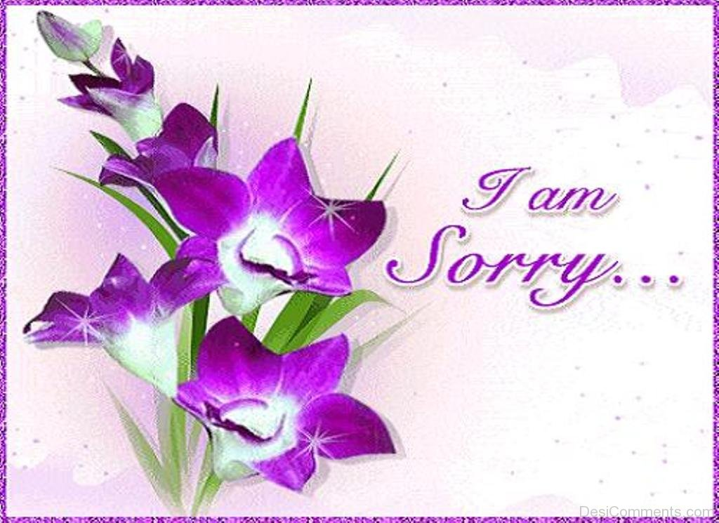 Sorry day hd wallpapers pics im sorry wallpapers gifs 1024x745 voltagebd Gallery